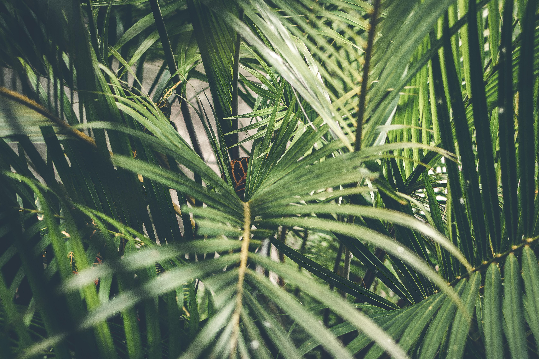4k-wallpaper-blur-botanical-1534172