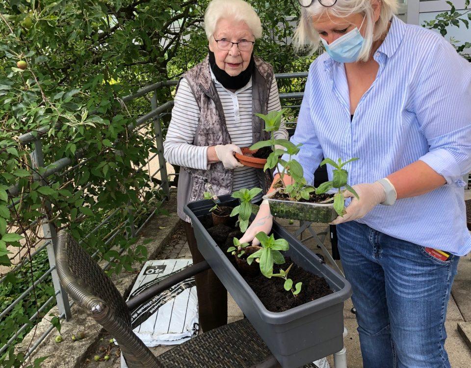 SZG 2020 06 18 Gartenprojekt in Seniorenzentrum Gundelfingen