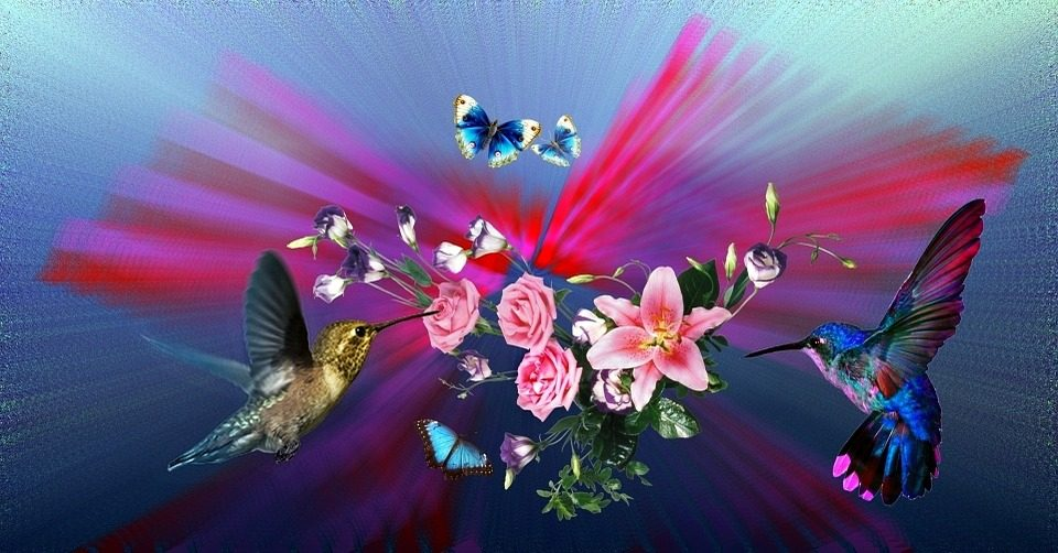 hummingbirds 1030389 960 720