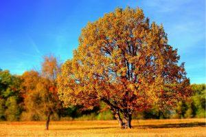 tree 99852 1920